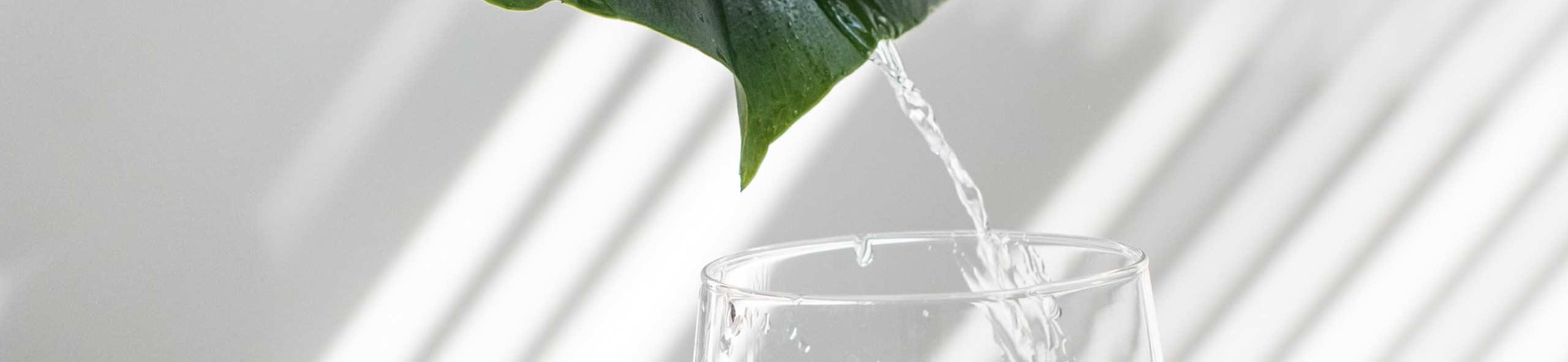 Wasserqualität des WVO